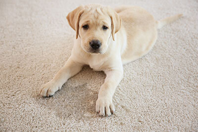 Pet Odor & Stain Removal Broomfield